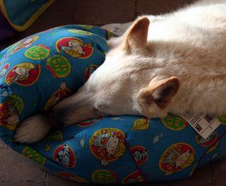 Monty September 20th 2009