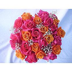 Pinkand orange roses