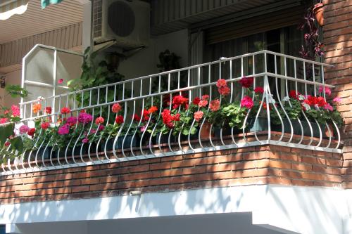 Geranium balcony